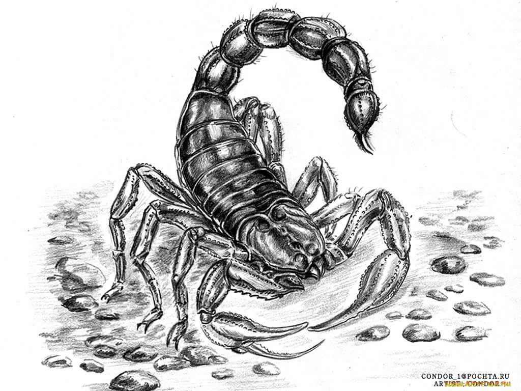 все скорпион рисунки картинки похитили зеленые человечки